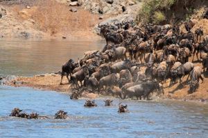 10 Big Game Safari Destinations