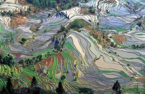 11 Incredible Terrace Fields
