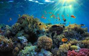 10 Best Dive Spots in the World