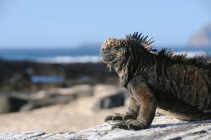 10 Island Ecosystems of the World