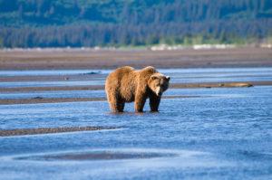 10 Best Destinations for a Bear Safari