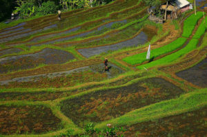 10 Top Tourist Attractions in Indonesia