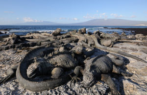 6 Reasons to Take a Galapagos Islands Cruise