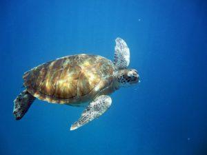 6 Best Scuba Diving Destinations