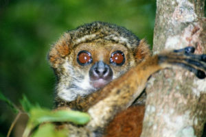 10 Top Tourist Attractions in Madagascar