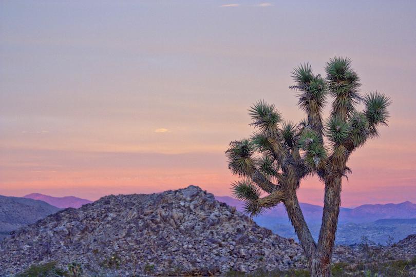 Joshua Tree National Park, California - Travel. Experience