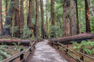 9 Best Day Trips from San Francisco