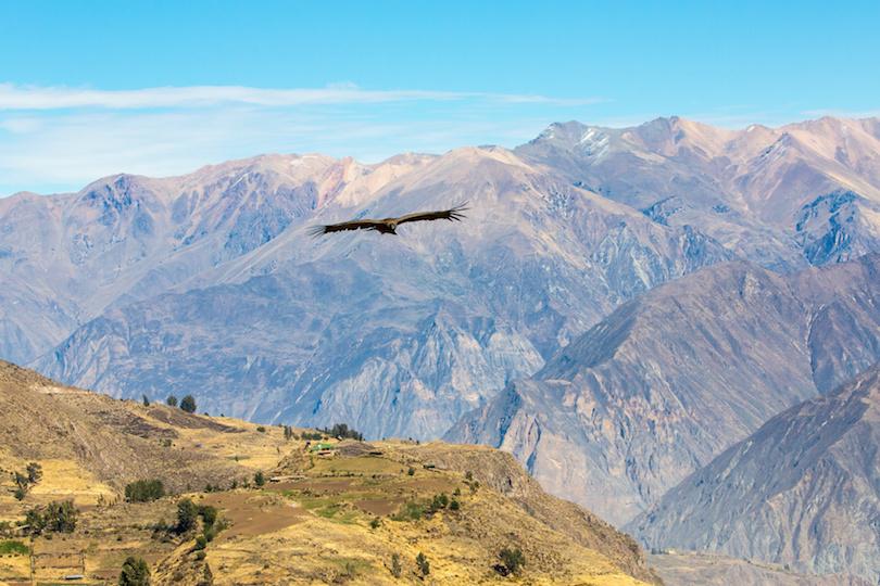 秃鹰飞越科尔卡峡谷