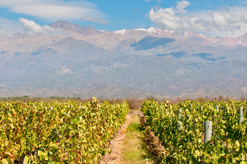 Vineyards of Mendoza