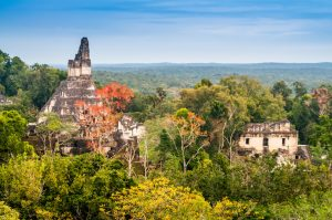 Uncover the Secrets of the Tikal Ruins