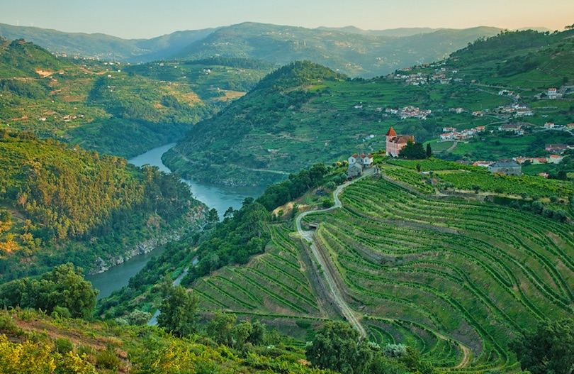 Vineyard Hills Douro Valley