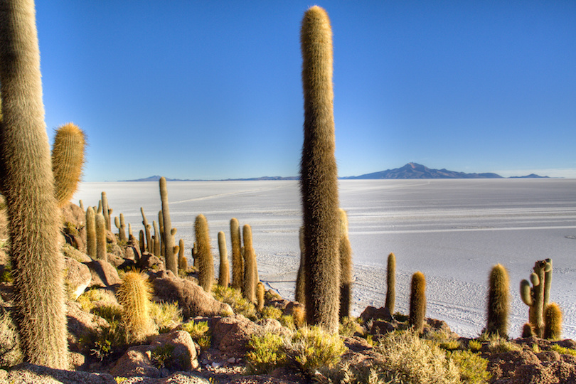 Cactuses at the salt flates of Uyuni, Bolivia