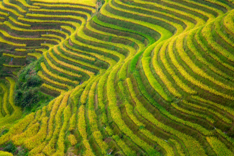 Longji Rice Terraces in south China
