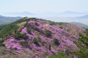 15 Top Tourist Attractions in South Korea