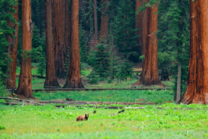 10 Most Beautiful National Parks California