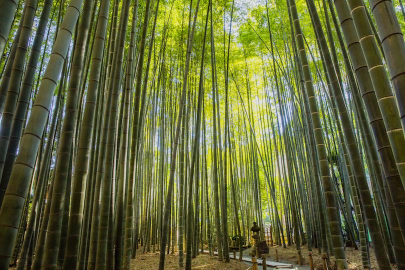 镰仓的竹园