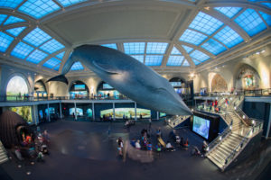 12 Best Museums in New York City