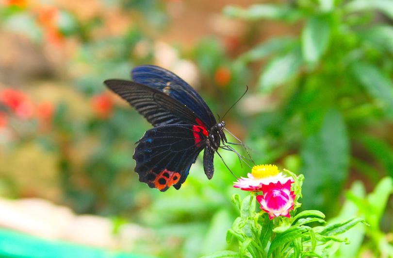 cameron butterfly garden