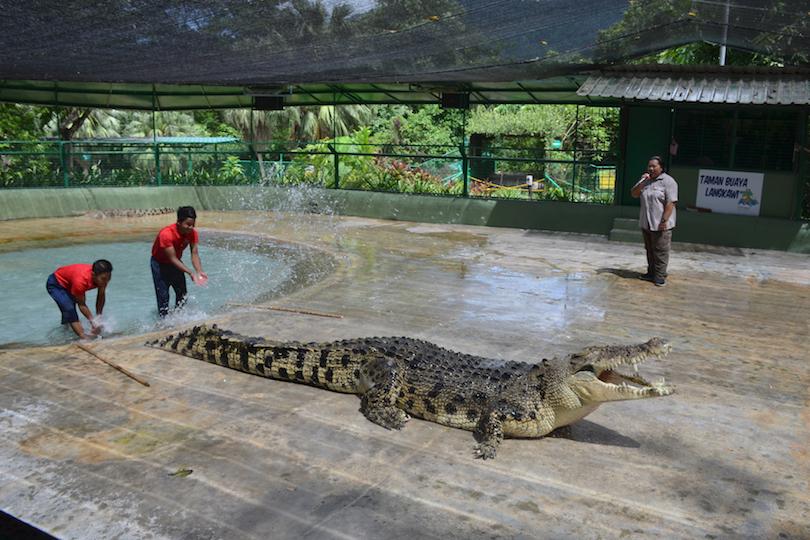 Crocodile Adventureland