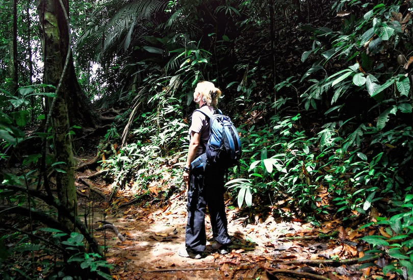 Jungle Trekking