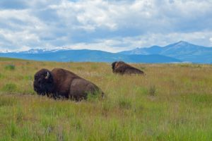 Best Things to do in Montana