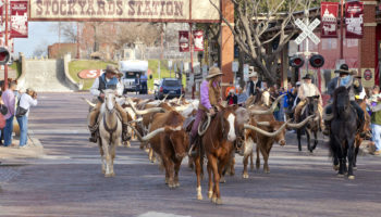 Best Things to do in Fort Worth, Texas