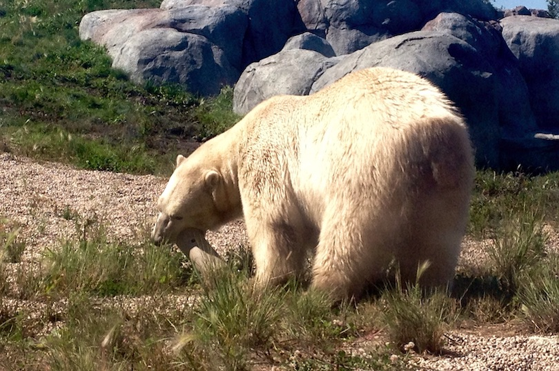Assiniboine Park Zoo
