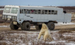 Things to Do in Churchill, Manitoba