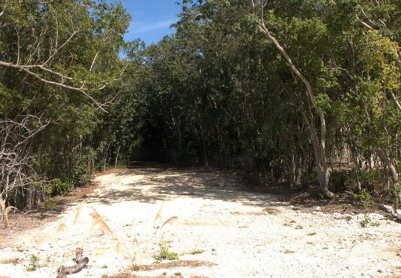 Hammock Botanical State Park