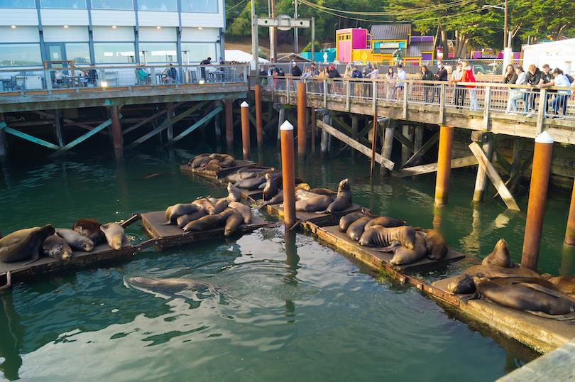 Sea Lion Docks