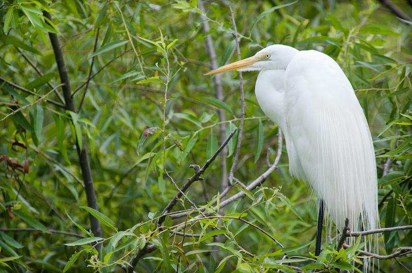 Pinckney Island National Wildlife Refuge