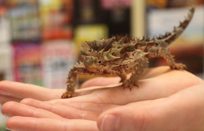Alice Springs Reptile Centre