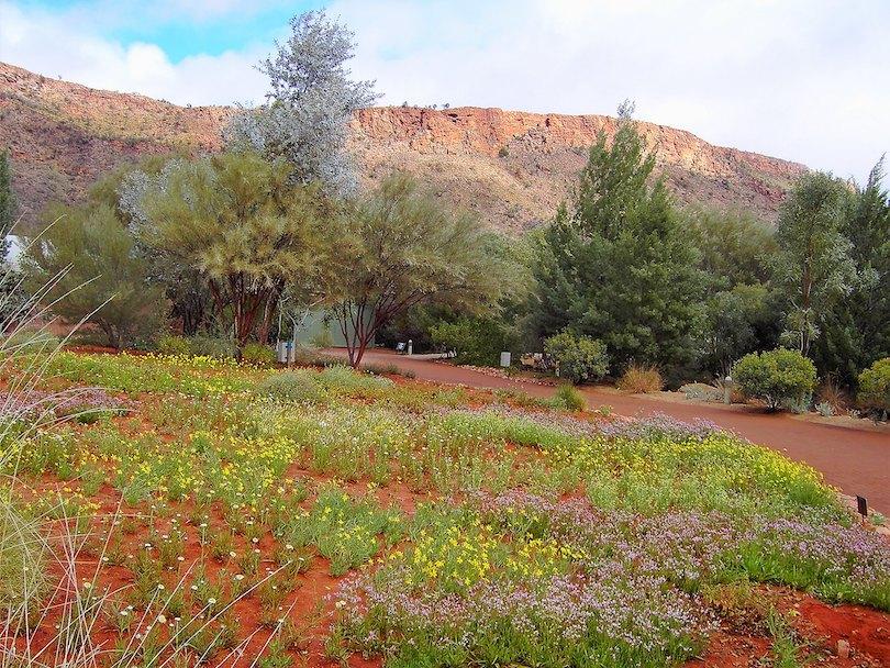 Olive Pink Botanic Gardens