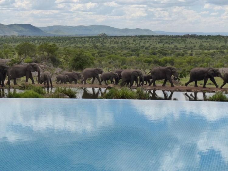 Piscina Four Seasons Safari Lodge