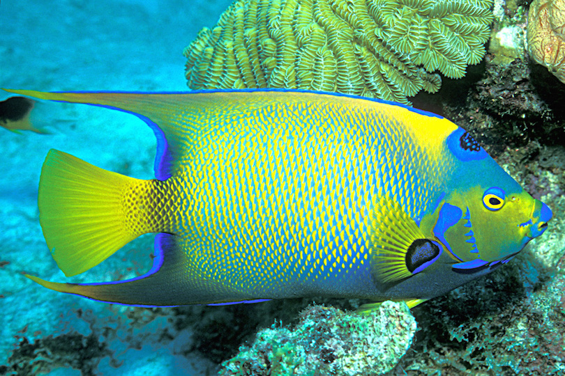 #1 of Best Island Reefs Around The World