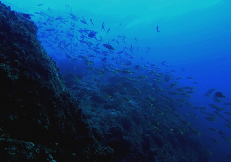 Pulau Tenggol