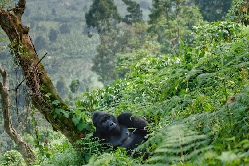 #1 of National Parks In Uganda
