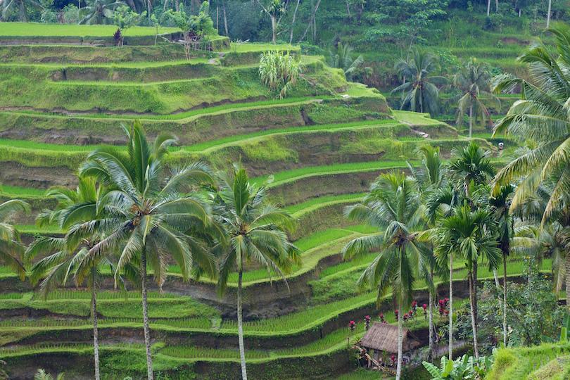 # 1 de los mejores lugares para visitar en Bali