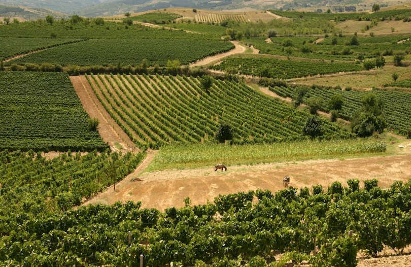 Tikves Wine Region
