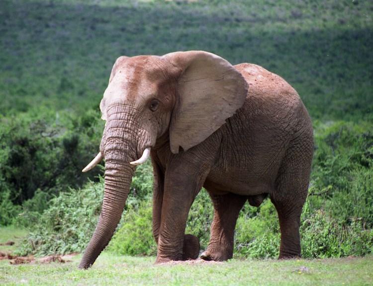 Parque Nacional Addo Elephant