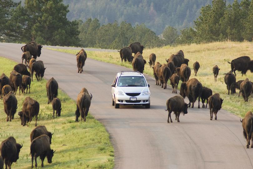 Parque estatal Custer