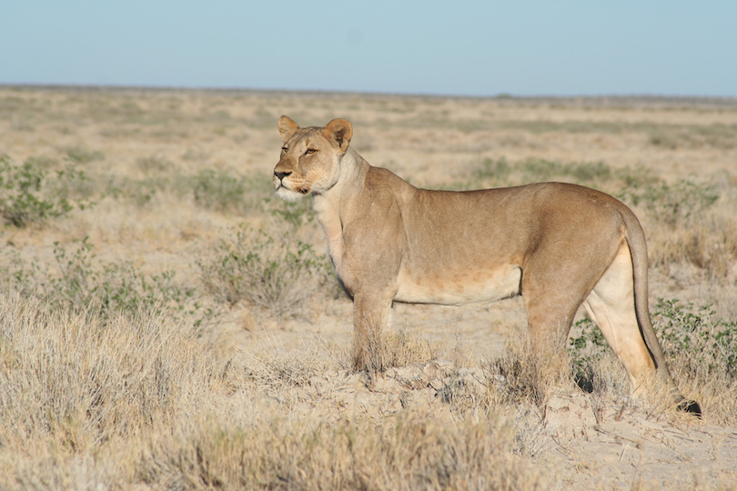 #1 of Tourist Attractions In Namibia