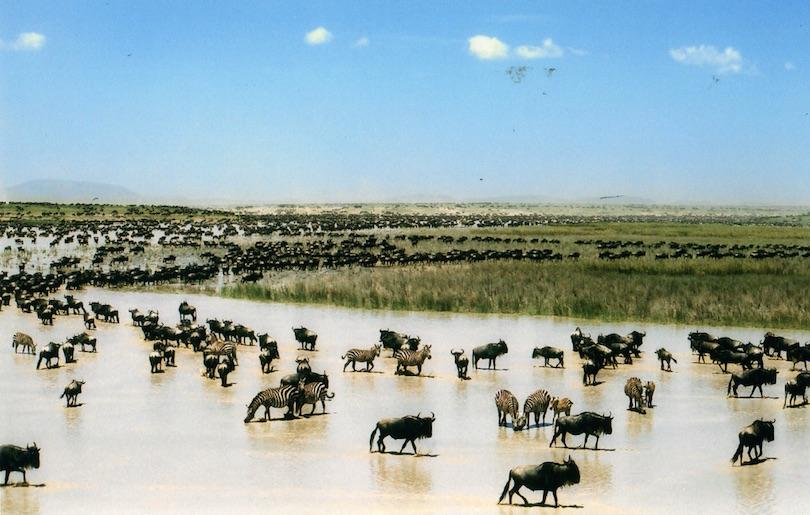# 1 de destinos de safari de caza mayor