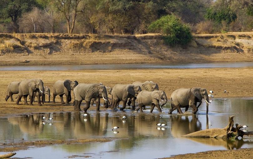 Parque Nacional South Luangwa