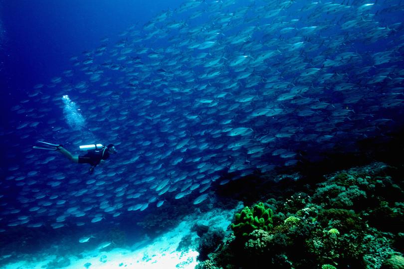Arrecife Tubbataha