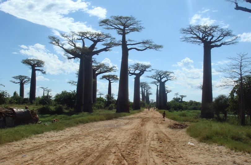 # 1 de árboles famosos del mundo