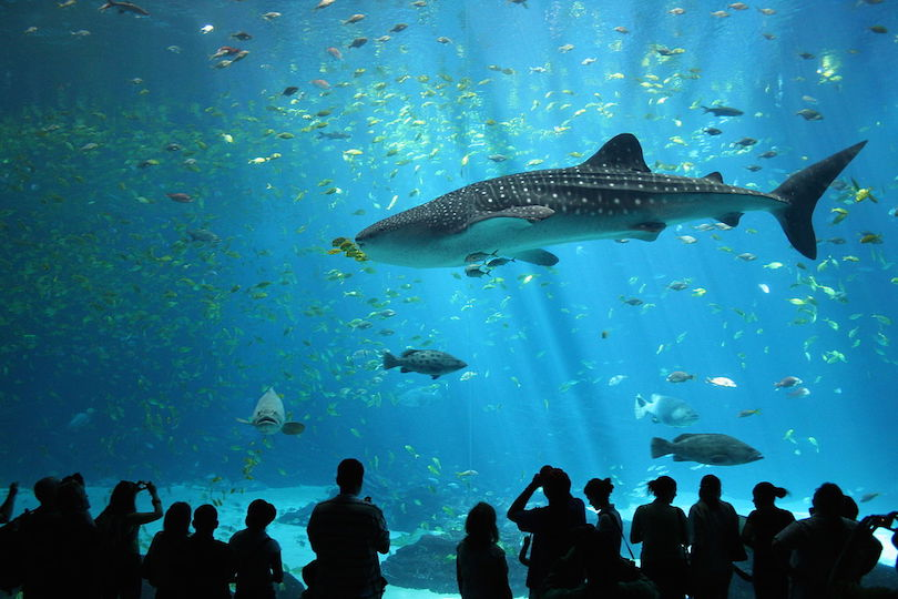 #1 of Largest Aquariums In The World