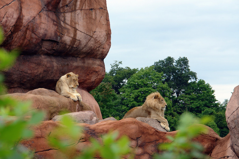 8 Largest Zoos in the World (with Photos & Map) - Touropia