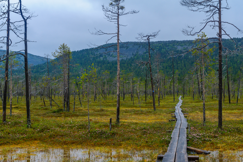 Pyha-Luosto National Park