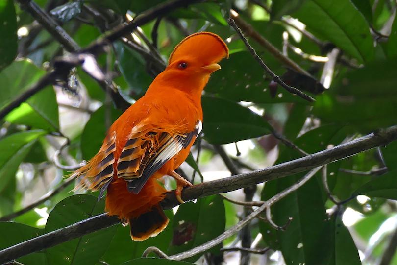 Guiana Amazonian National Park